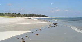 Shelburne County Beaches